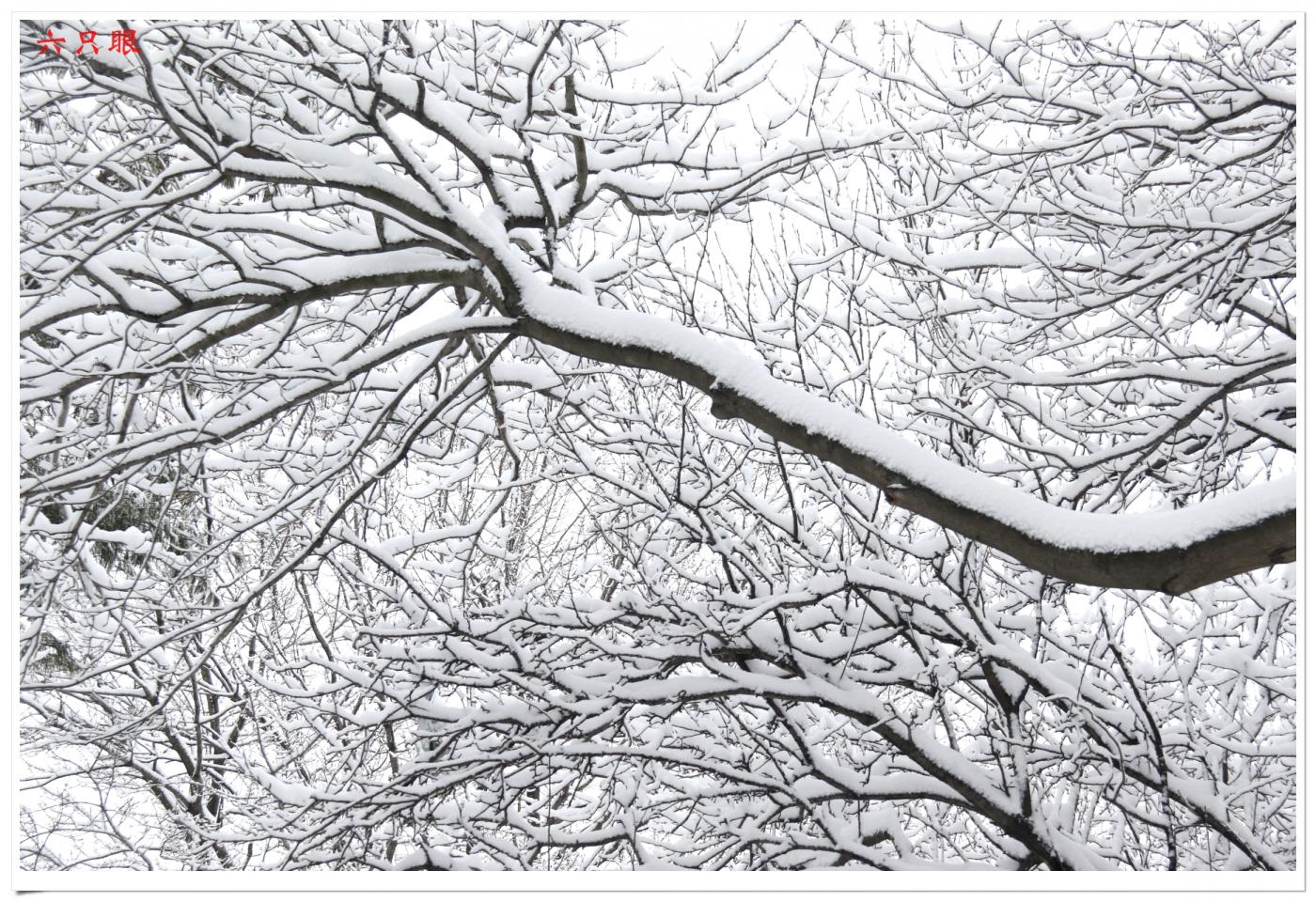 六只眼:好雪迎春来_图1-6