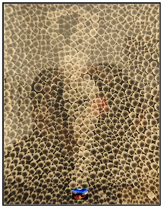 纽约大博会藏攝影术早期作品_图1-6