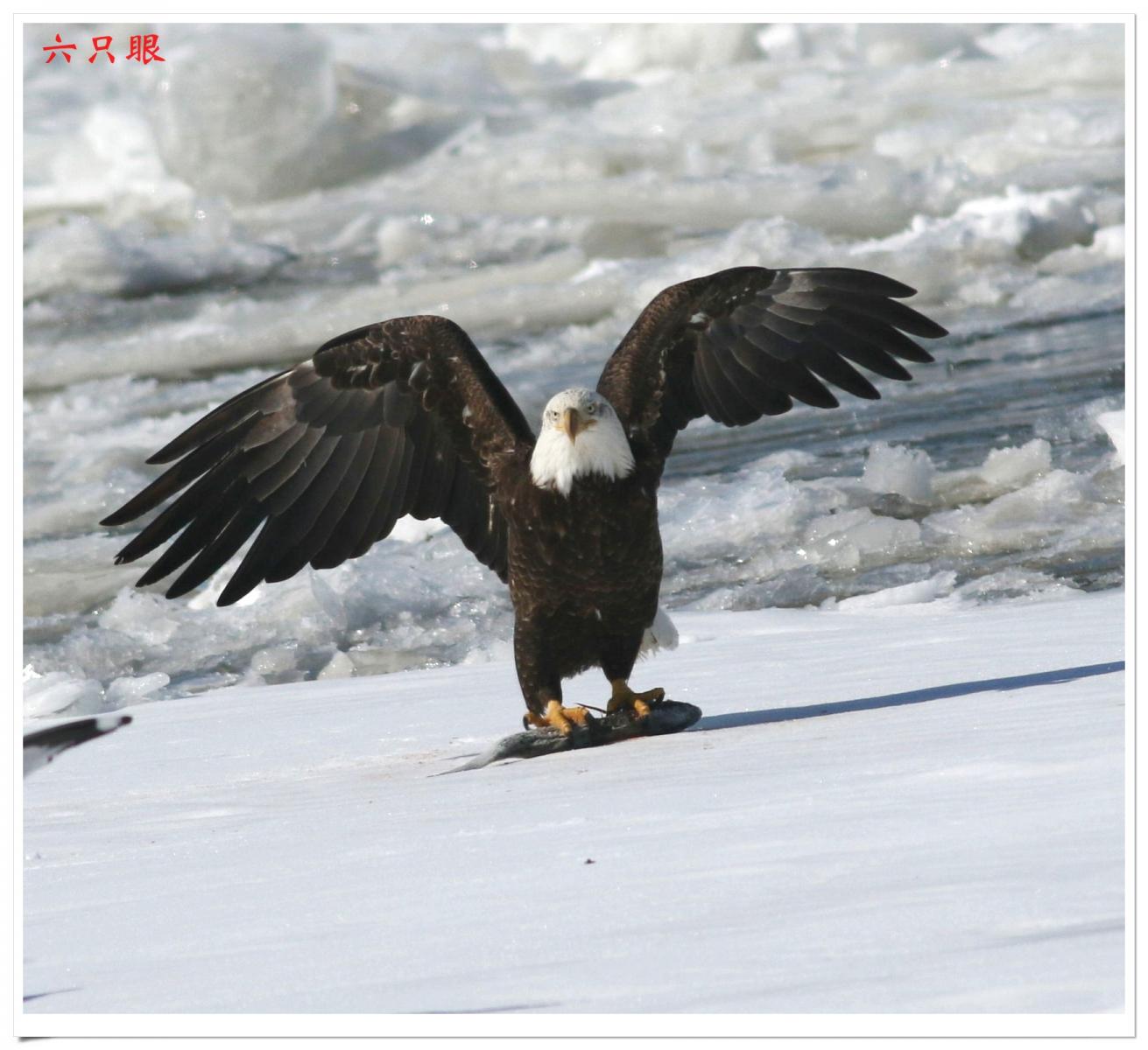 六只眼:冰上鹰姿_图1-3