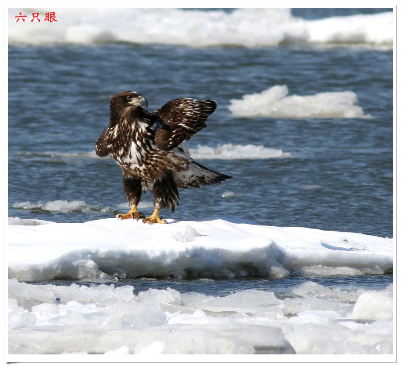 六只眼:冰上鹰姿_图1-10