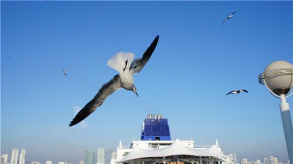 迈阿密至巴哈马---邮轮之旅(后记)_图1-20