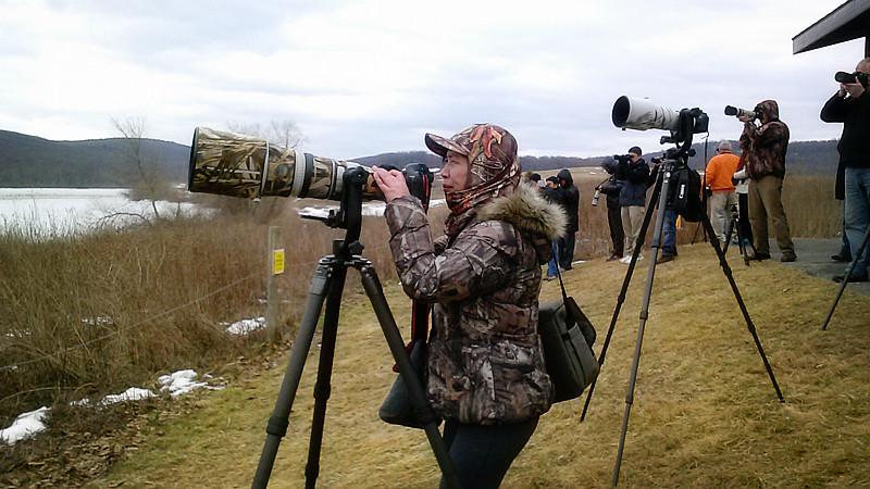周末去宾州观雪雁、一路随拍与你分享_图1-13