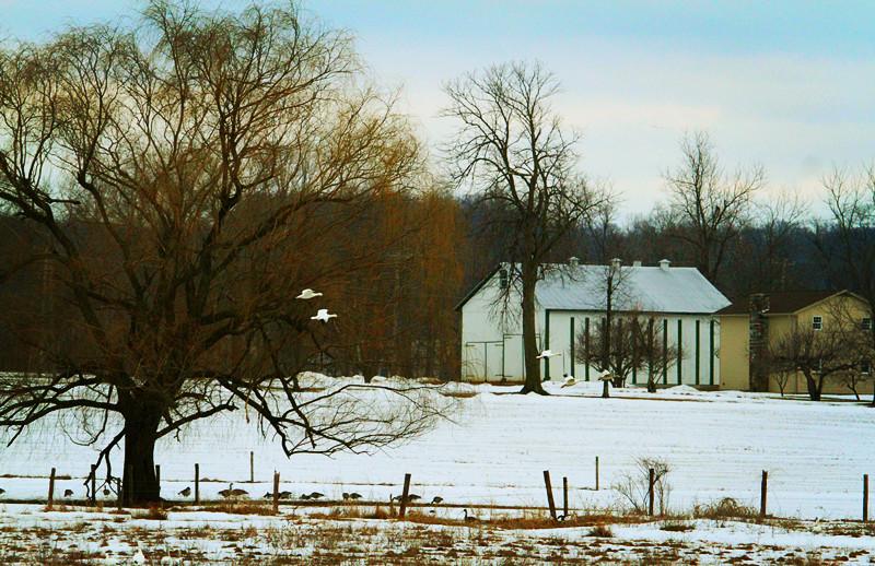 周末去宾州观雪雁、一路随拍与你分享_图1-23