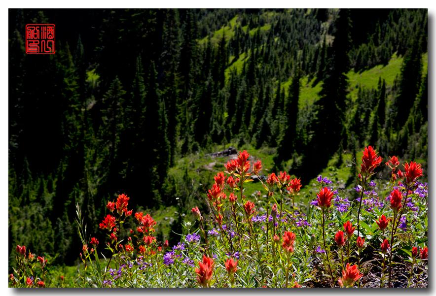 《酒一船摄影》:雷尼尔山国家公园行_图1-7