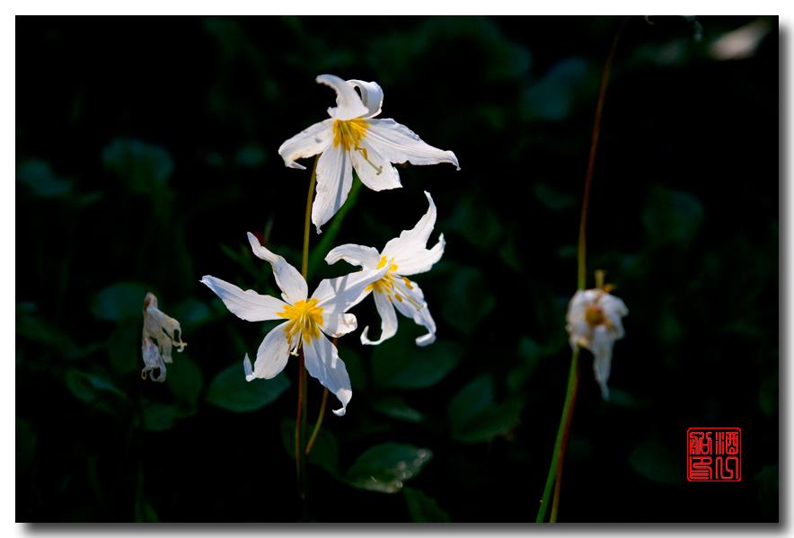 《酒一船摄影》:雷尼尔山国家公园行_图1-26