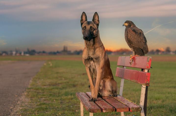 【攝影蟲】德國牧羊狼犬與它的朋友____Tanja Brandt_图1-4