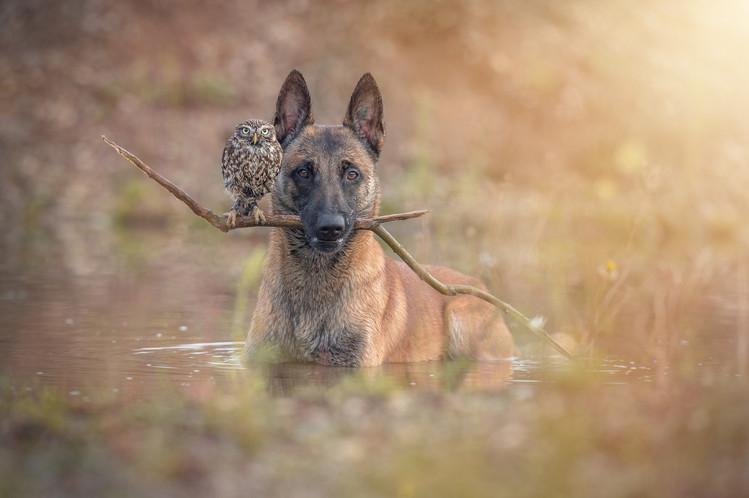 【攝影蟲】德國牧羊狼犬與它的朋友____Tanja Brandt_图1-5