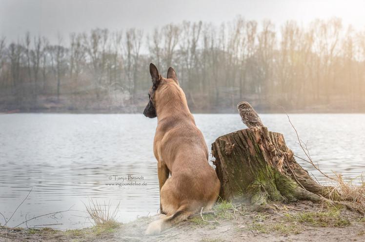 【攝影蟲】德國牧羊狼犬與它的朋友____Tanja Brandt_图1-7