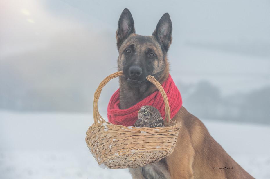 【攝影蟲】德國牧羊狼犬與它的朋友____Tanja Brandt_图1-3
