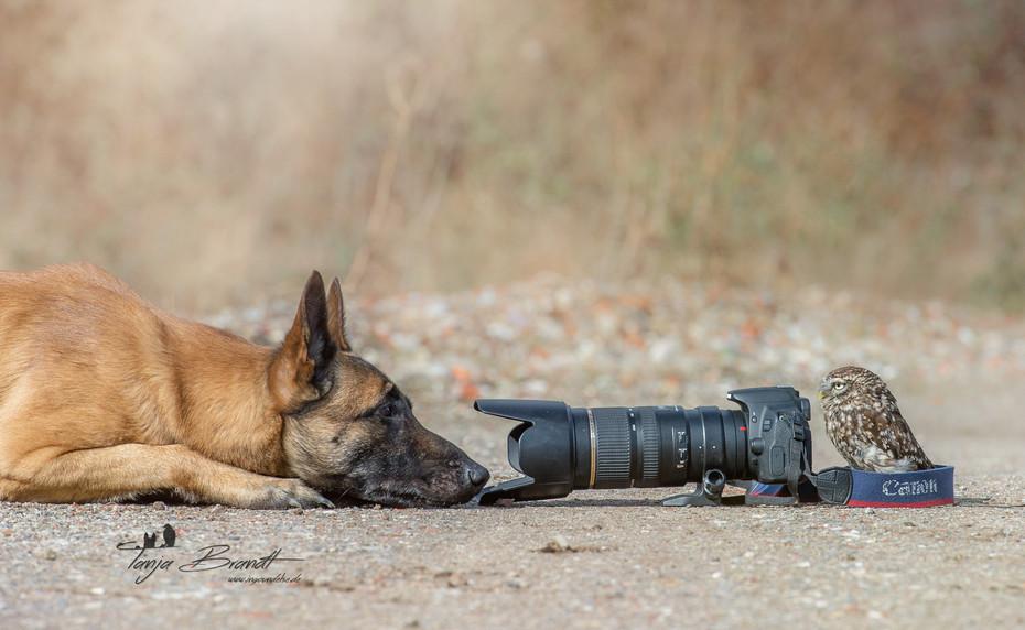 【攝影蟲】德國牧羊狼犬與它的朋友____Tanja Brandt_图1-1