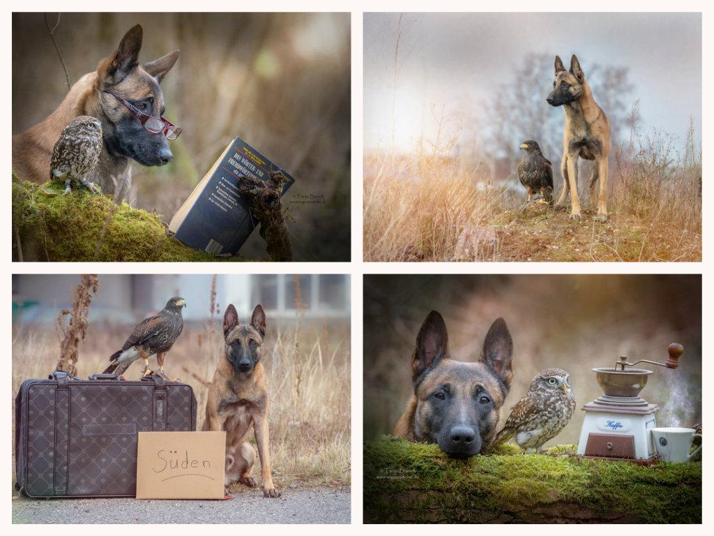 【攝影蟲】德國牧羊狼犬與它的朋友____Tanja Brandt_图1-9