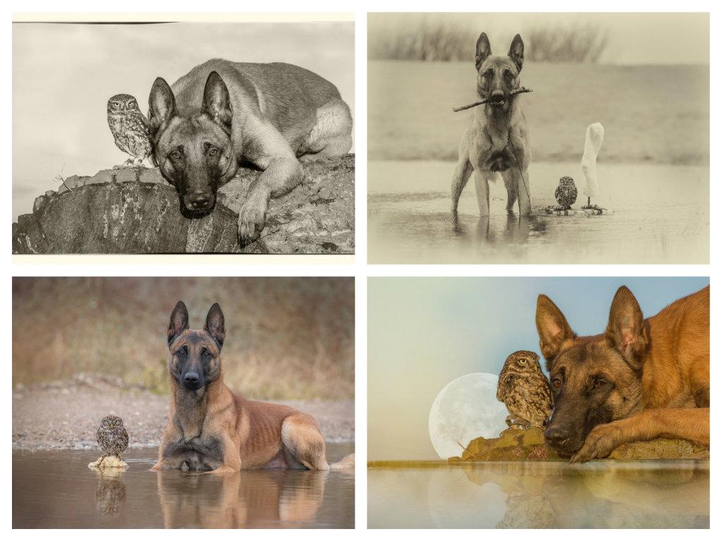 【攝影蟲】德國牧羊狼犬與它的朋友____Tanja Brandt_图1-10
