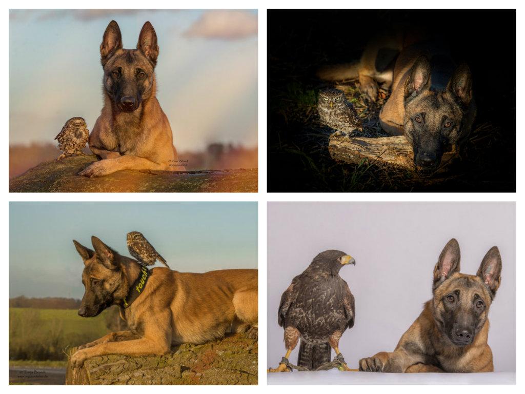 【攝影蟲】德國牧羊狼犬與它的朋友____Tanja Brandt_图1-11