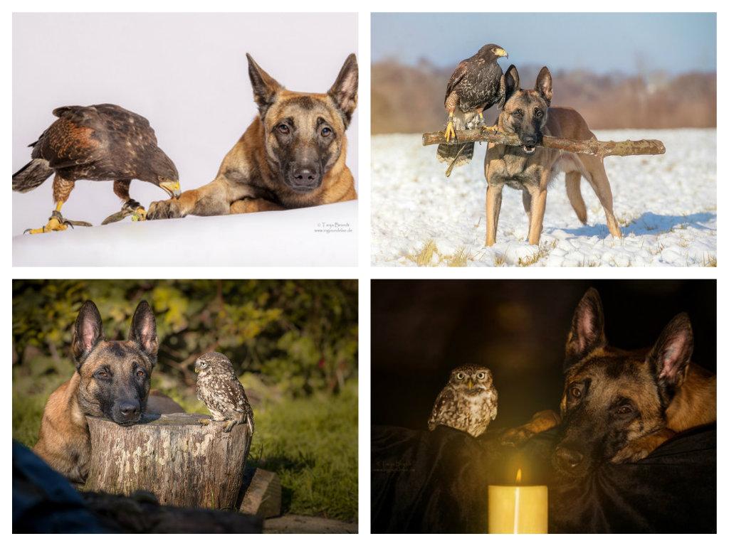 【攝影蟲】德國牧羊狼犬與它的朋友____Tanja Brandt_图1-12