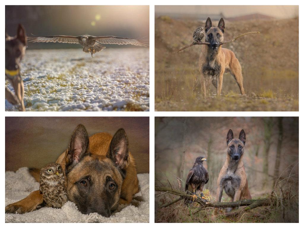 【攝影蟲】德國牧羊狼犬與它的朋友____Tanja Brandt_图1-13