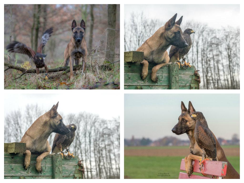 【攝影蟲】德國牧羊狼犬與它的朋友____Tanja Brandt_图1-14