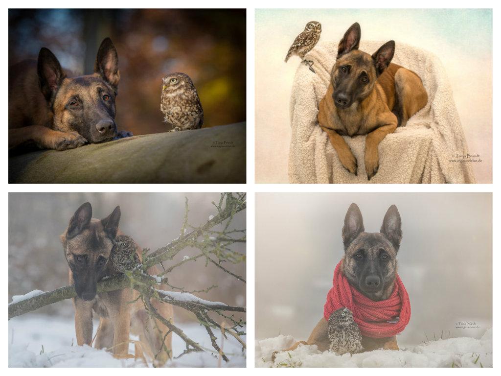 【攝影蟲】德國牧羊狼犬與它的朋友____Tanja Brandt_图1-15