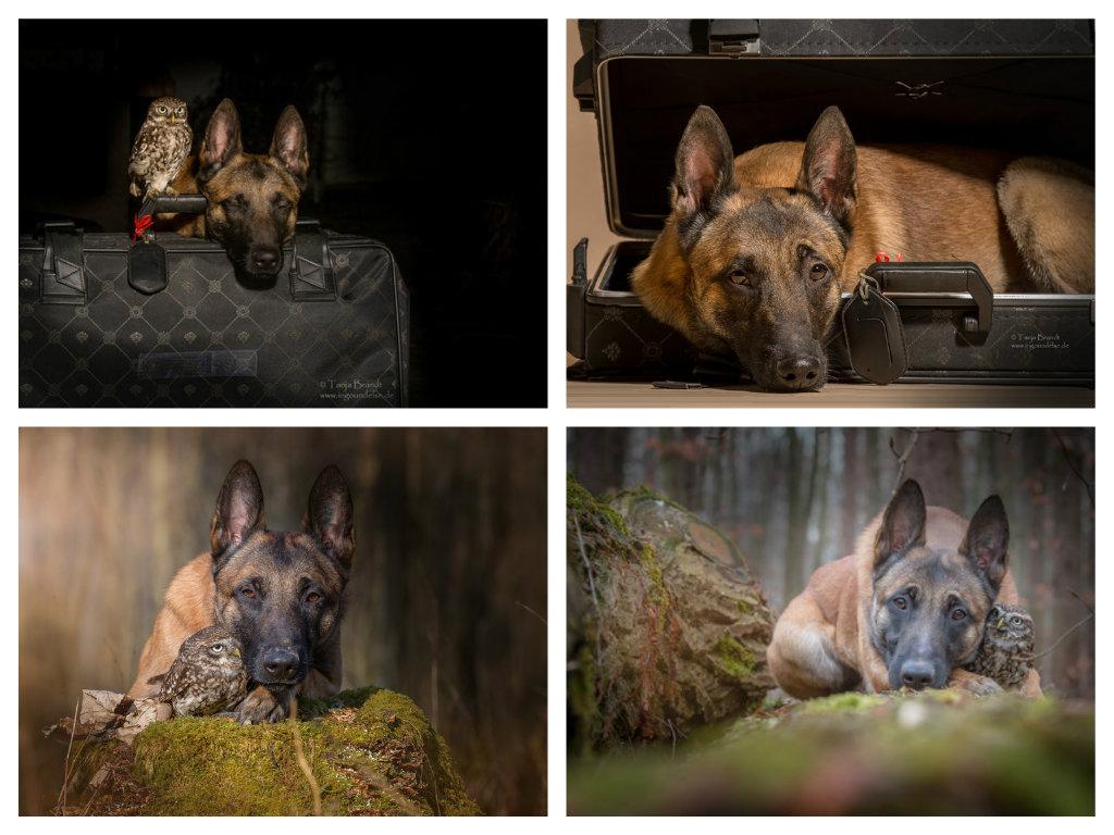【攝影蟲】德國牧羊狼犬與它的朋友____Tanja Brandt_图1-16