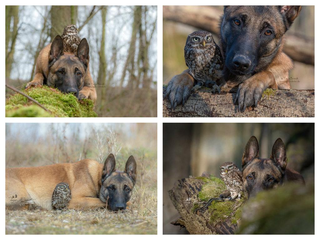 【攝影蟲】德國牧羊狼犬與它的朋友____Tanja Brandt_图1-17