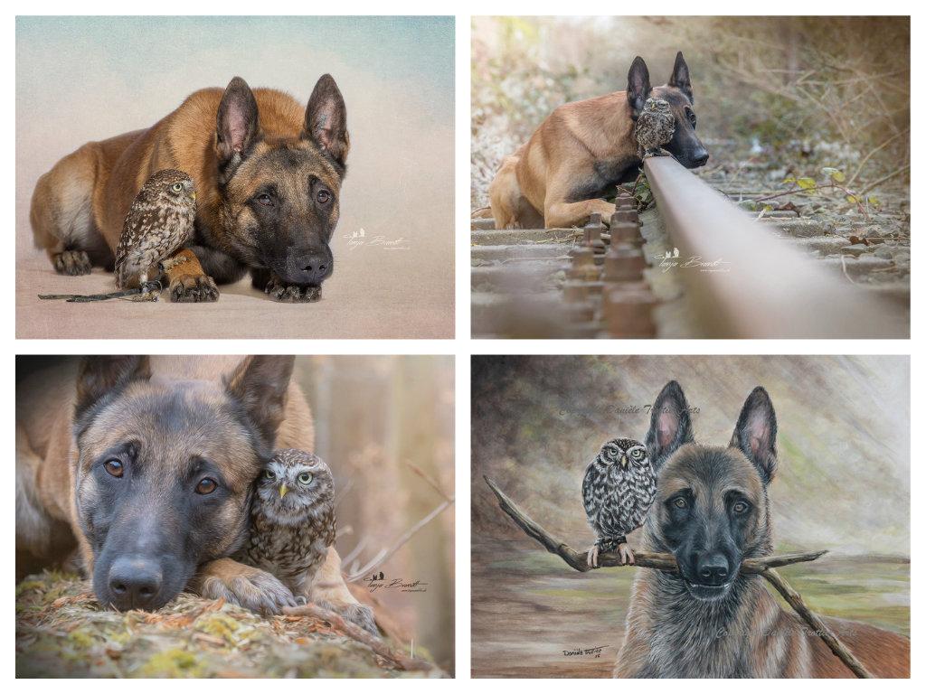 【攝影蟲】德國牧羊狼犬與它的朋友____Tanja Brandt_图1-18