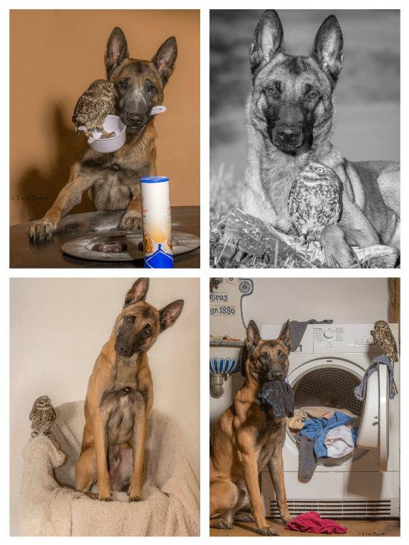 【攝影蟲】德國牧羊狼犬與它的朋友____Tanja Brandt_图1-19