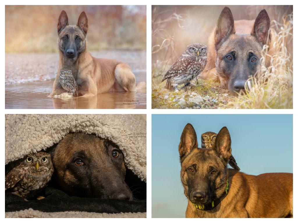 【攝影蟲】德國牧羊狼犬與它的朋友____Tanja Brandt_图1-8