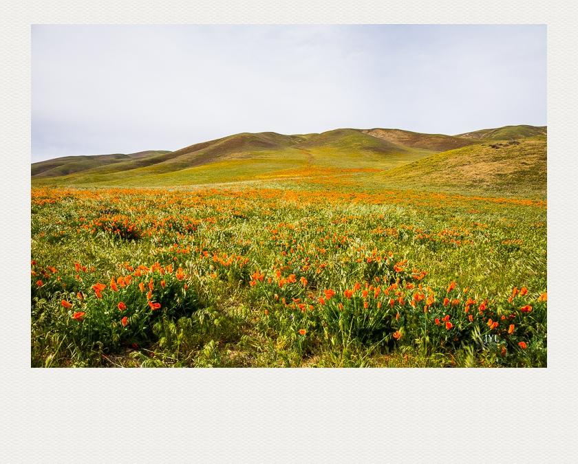 翻山越岭,寻找野花