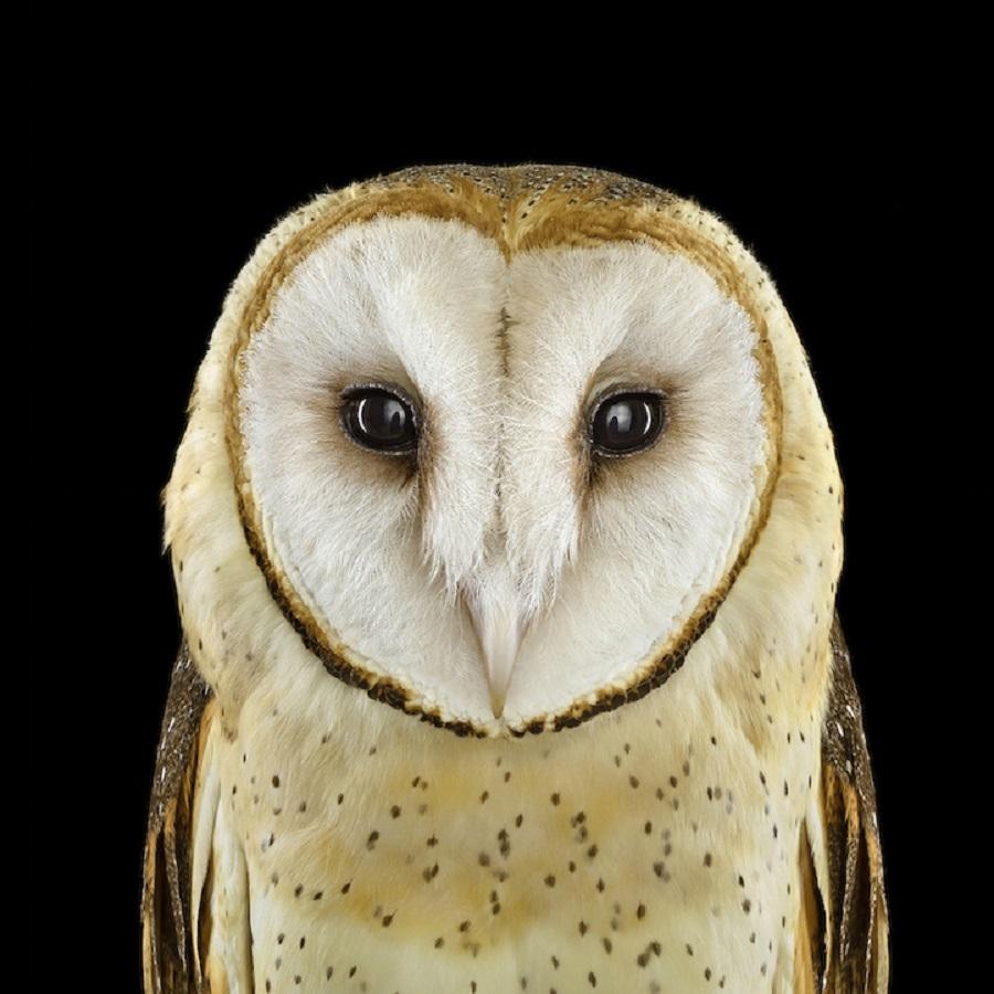 【 攝影蟲】$40,000美元中片幅數碼相机下的貓頭鷹俏像_图1-1