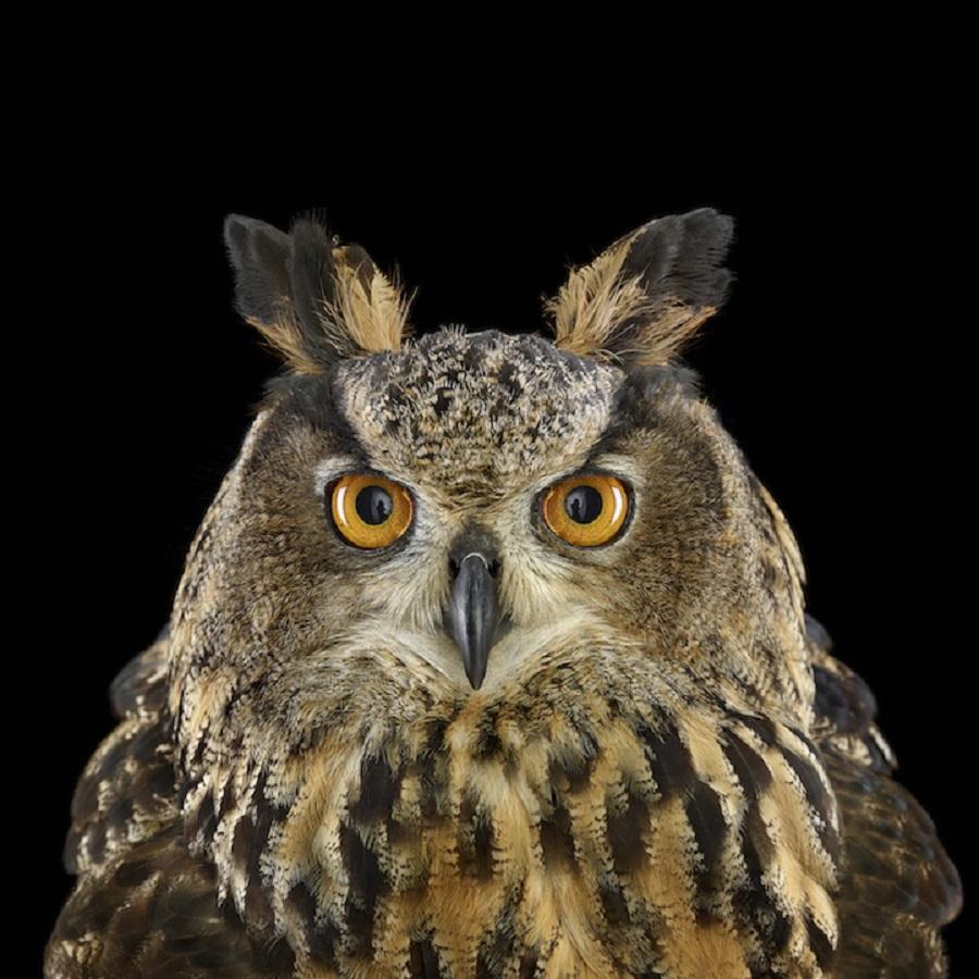 【 攝影蟲】$40,000美元中片幅數碼相机下的貓頭鷹俏像_图1-3