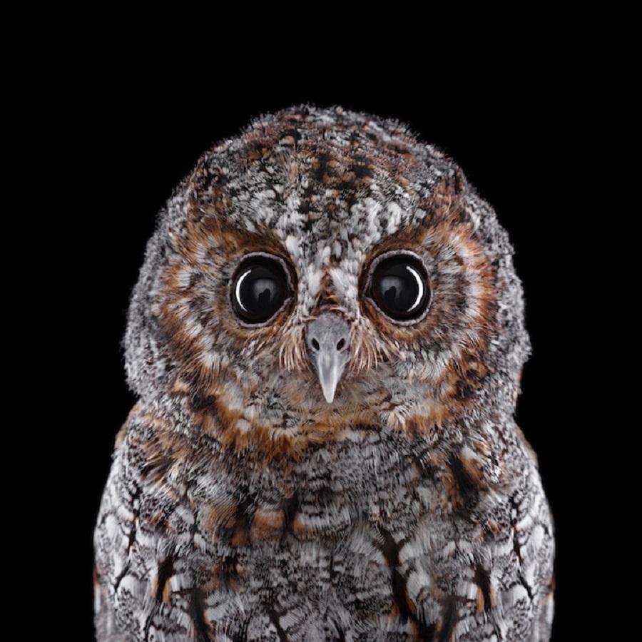 【 攝影蟲】$40,000美元中片幅數碼相机下的貓頭鷹俏像_图1-4