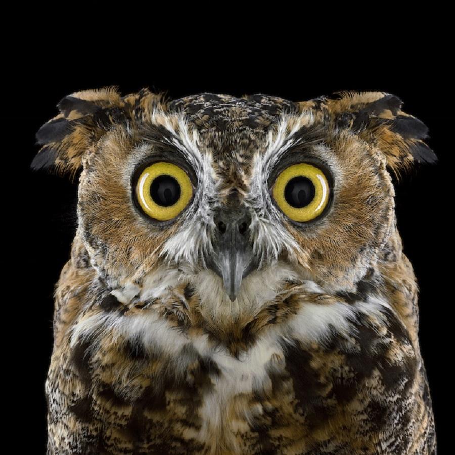 【 攝影蟲】$40,000美元中片幅數碼相机下的貓頭鷹俏像_图1-5