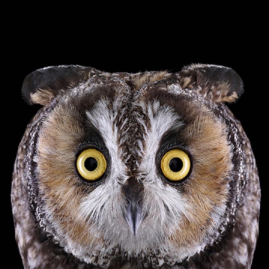 【 攝影蟲】$40,000美元中片幅數碼相机下的貓頭鷹俏像_图1-6