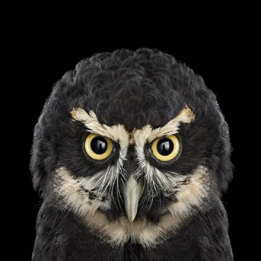 【 攝影蟲】$40,000美元中片幅數碼相机下的貓頭鷹俏像_图1-8