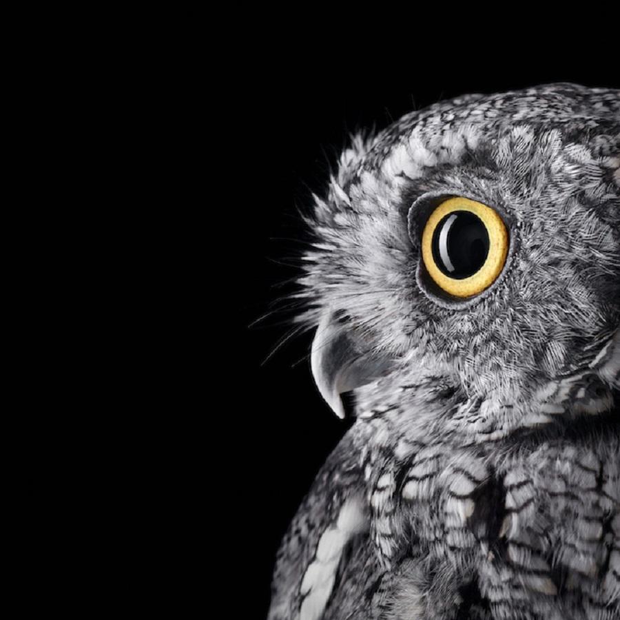 【 攝影蟲】$40,000美元中片幅數碼相机下的貓頭鷹俏像_图1-9