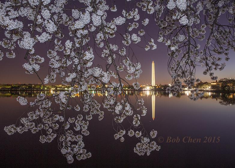 [海洋攝影] 2015年華盛頓DC櫻花節_图1-1