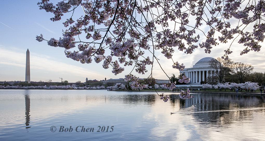 [海洋攝影] 2015年華盛頓DC櫻花節_图1-4