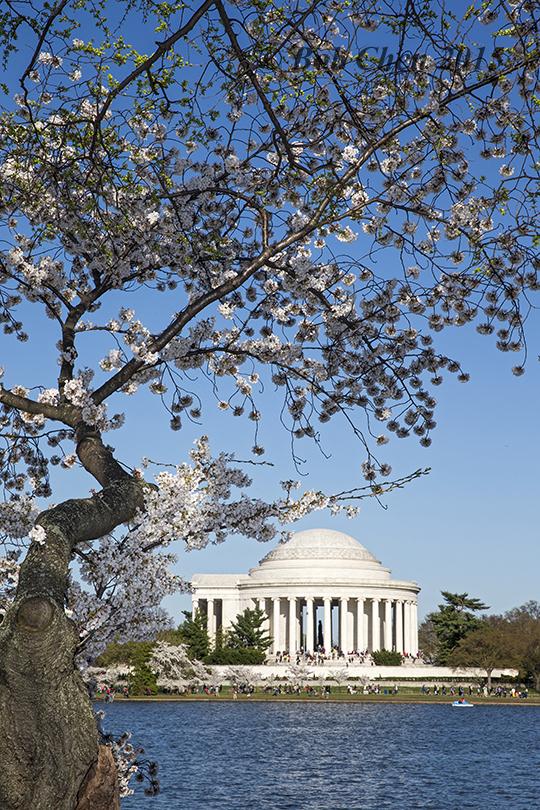 [海洋攝影] 2015年華盛頓DC櫻花節_图1-19