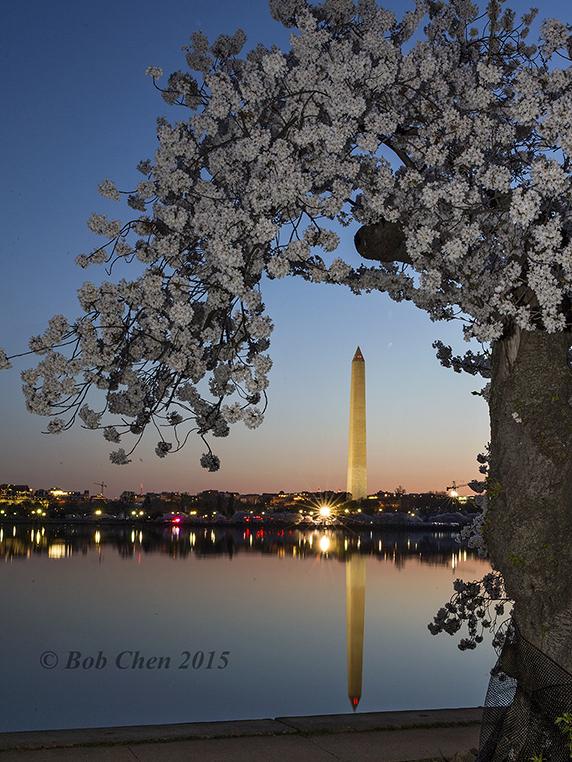 [海洋攝影] 2015年華盛頓DC櫻花節_图1-3