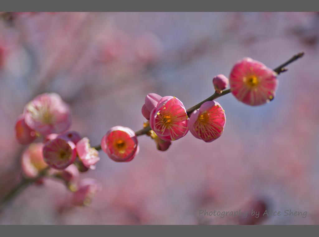 一支梅花迎春来_图1-1