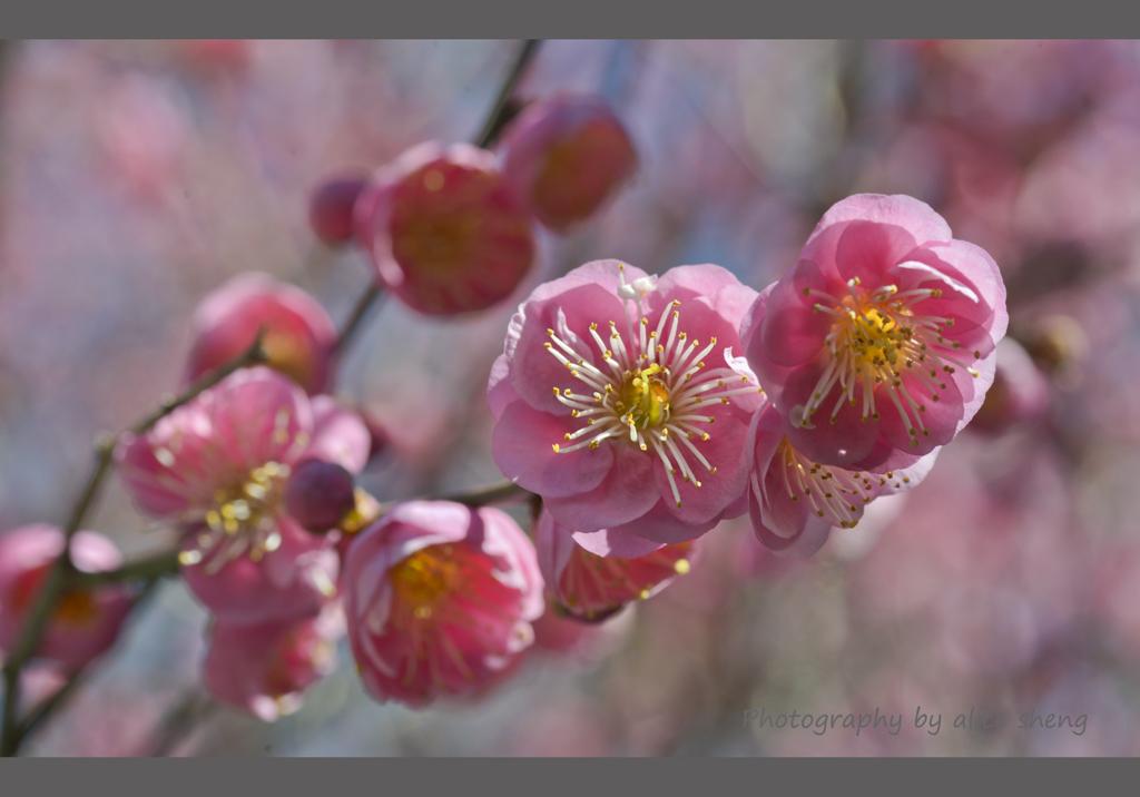 一支梅花迎春来_图1-2