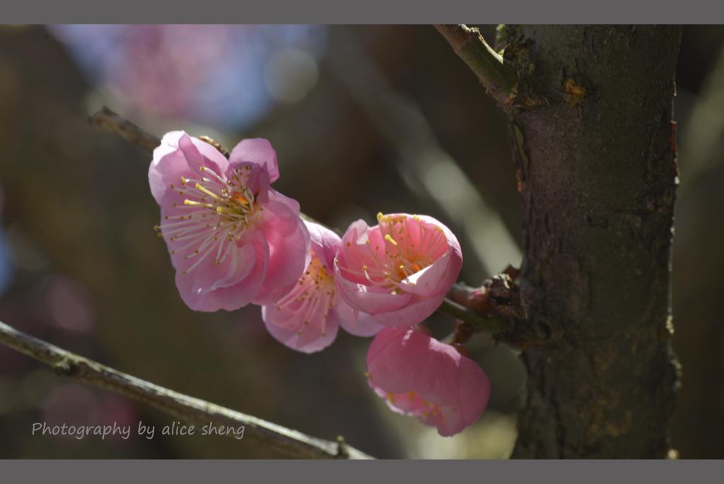 一支梅花迎春来_图1-4