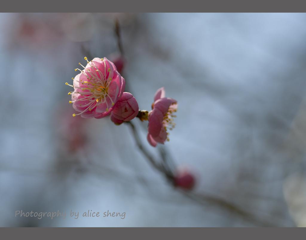 一支梅花迎春来_图1-5