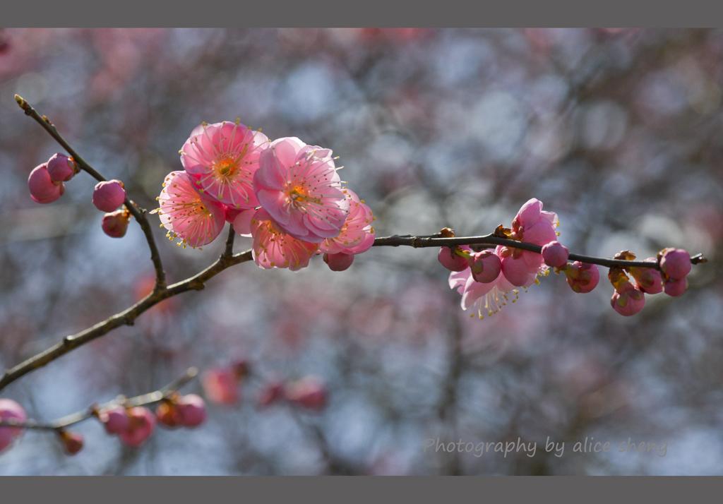 一支梅花迎春来_图1-6