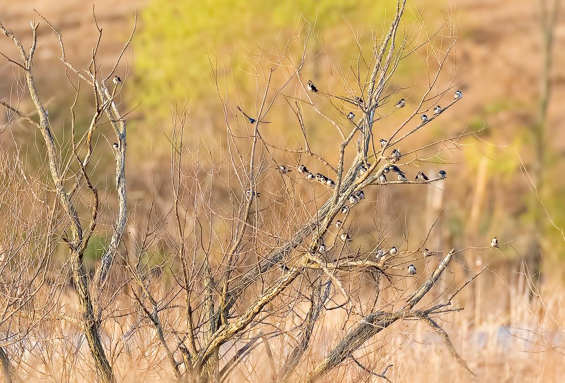 红牛湿地抓拍一小时_图2-12