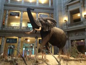DC的自然历史博物馆