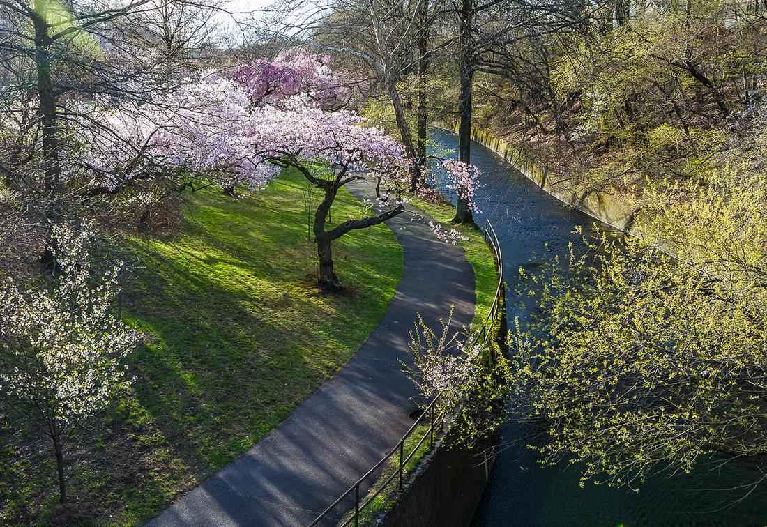 樱花盛开在纽瓦克_图1-10