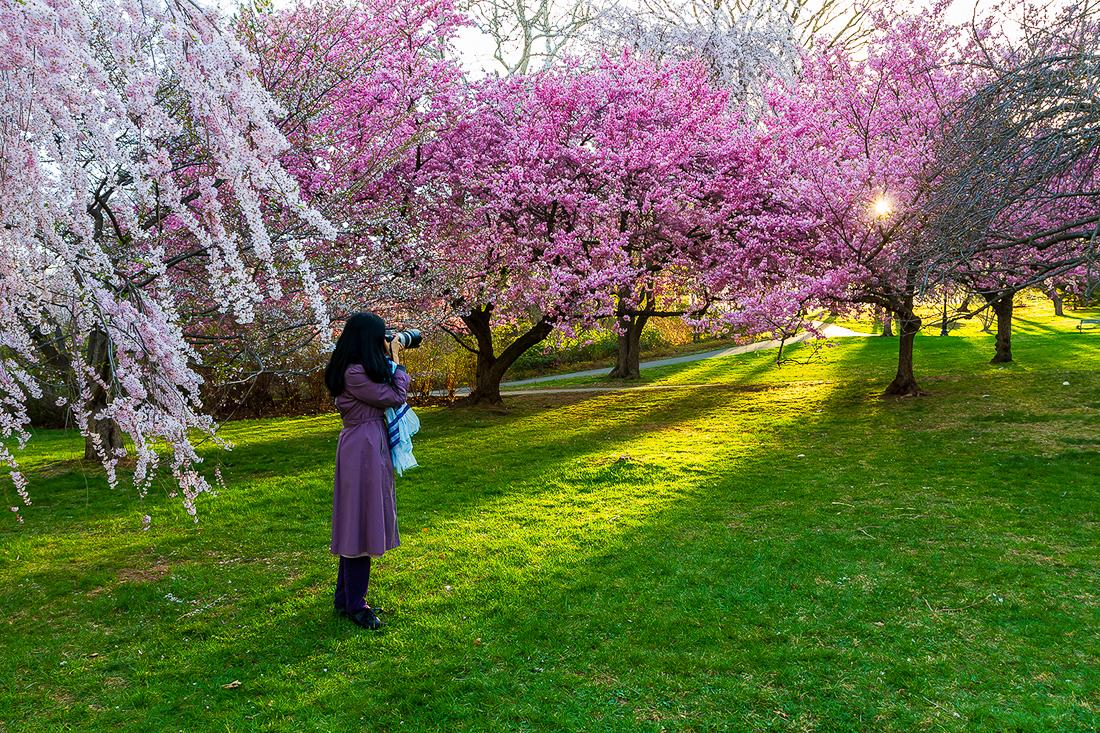 樱花盛开在纽瓦克_图1-14