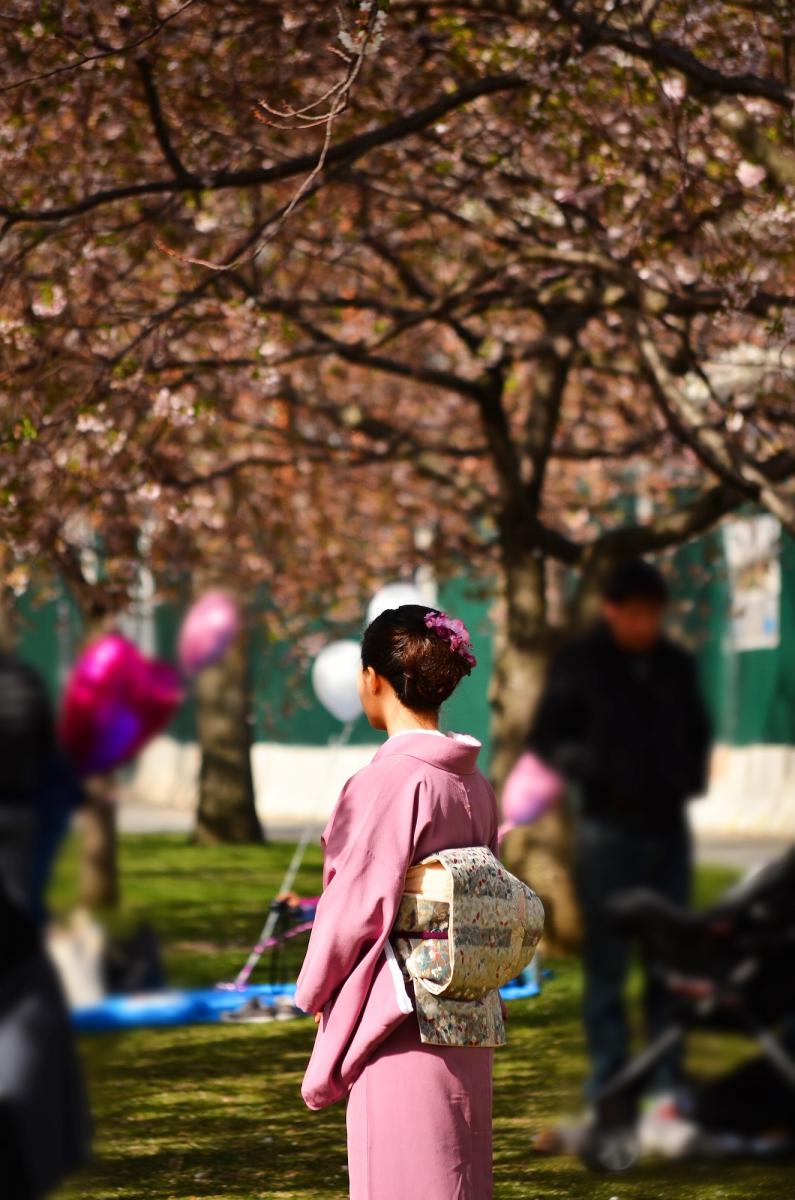 春光甚好 罗岛樱花已然盛放_图1-9
