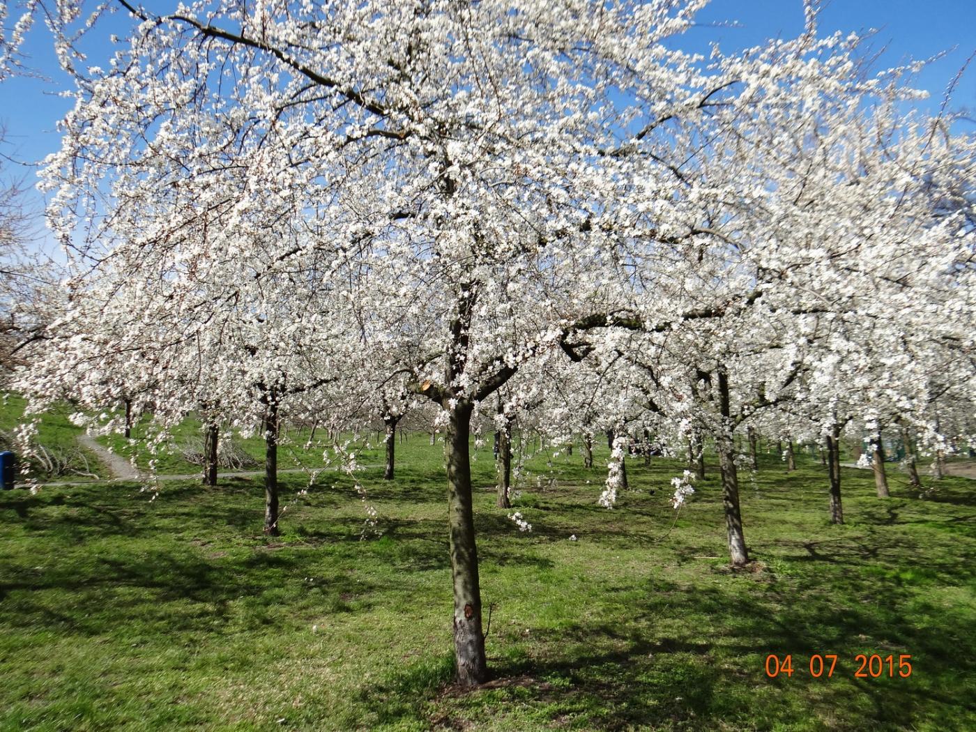 布拉格之春_图1-65