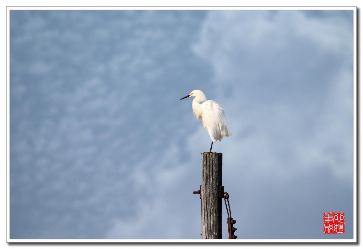 蓝天白云,白鹭悠悠